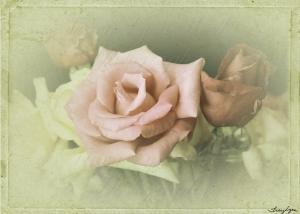 5x7 rose vintage 02 copy