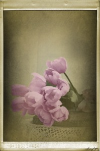 tulips vintage fx 01
