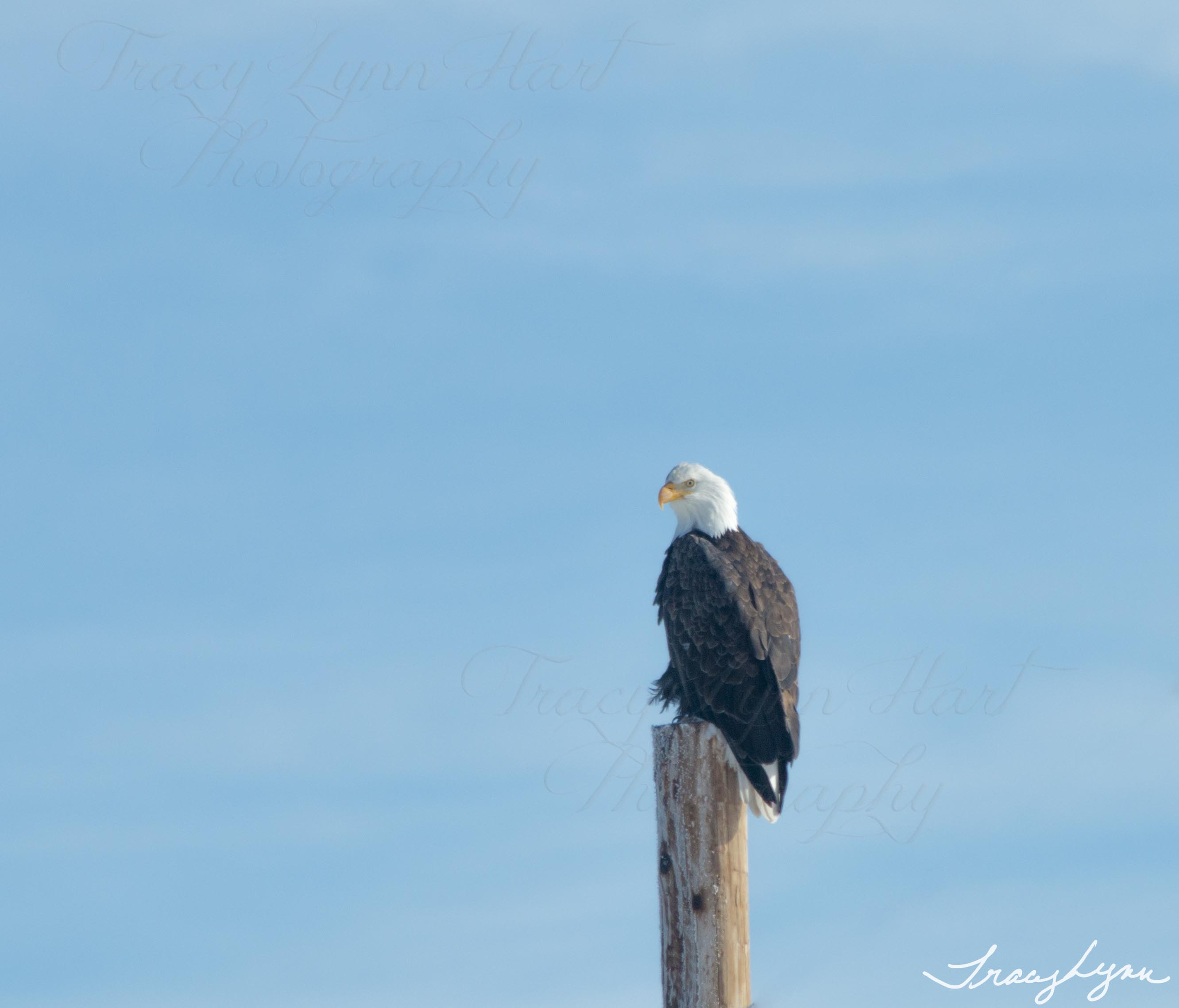 Eagle 01 blog