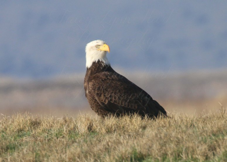 Eagle 04 Blog