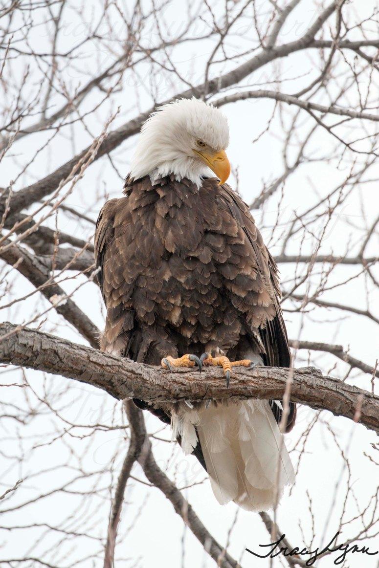 Eagle 09 blog