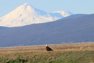 Eagle and Mt Shasta