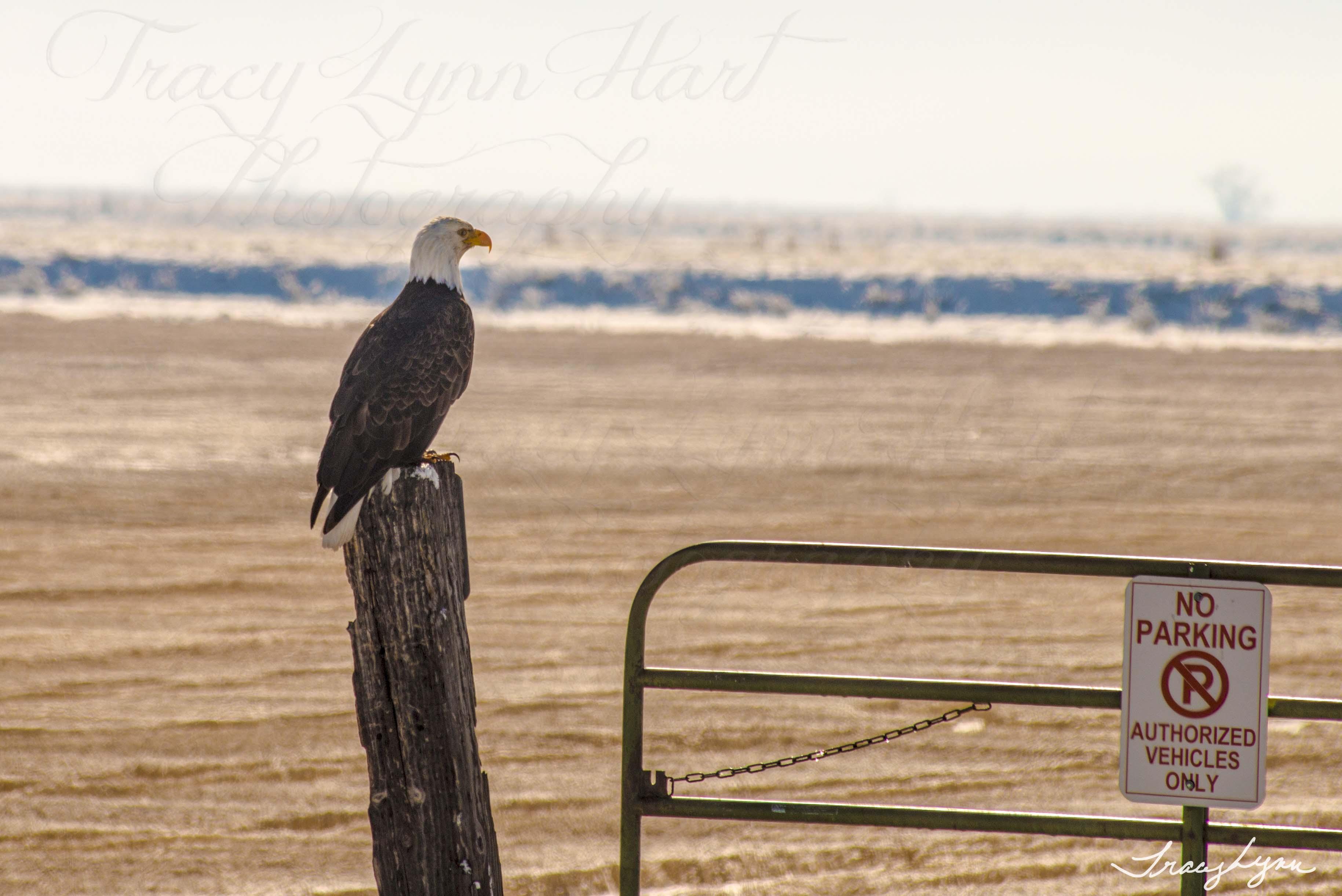 Eagle no parking 01blog