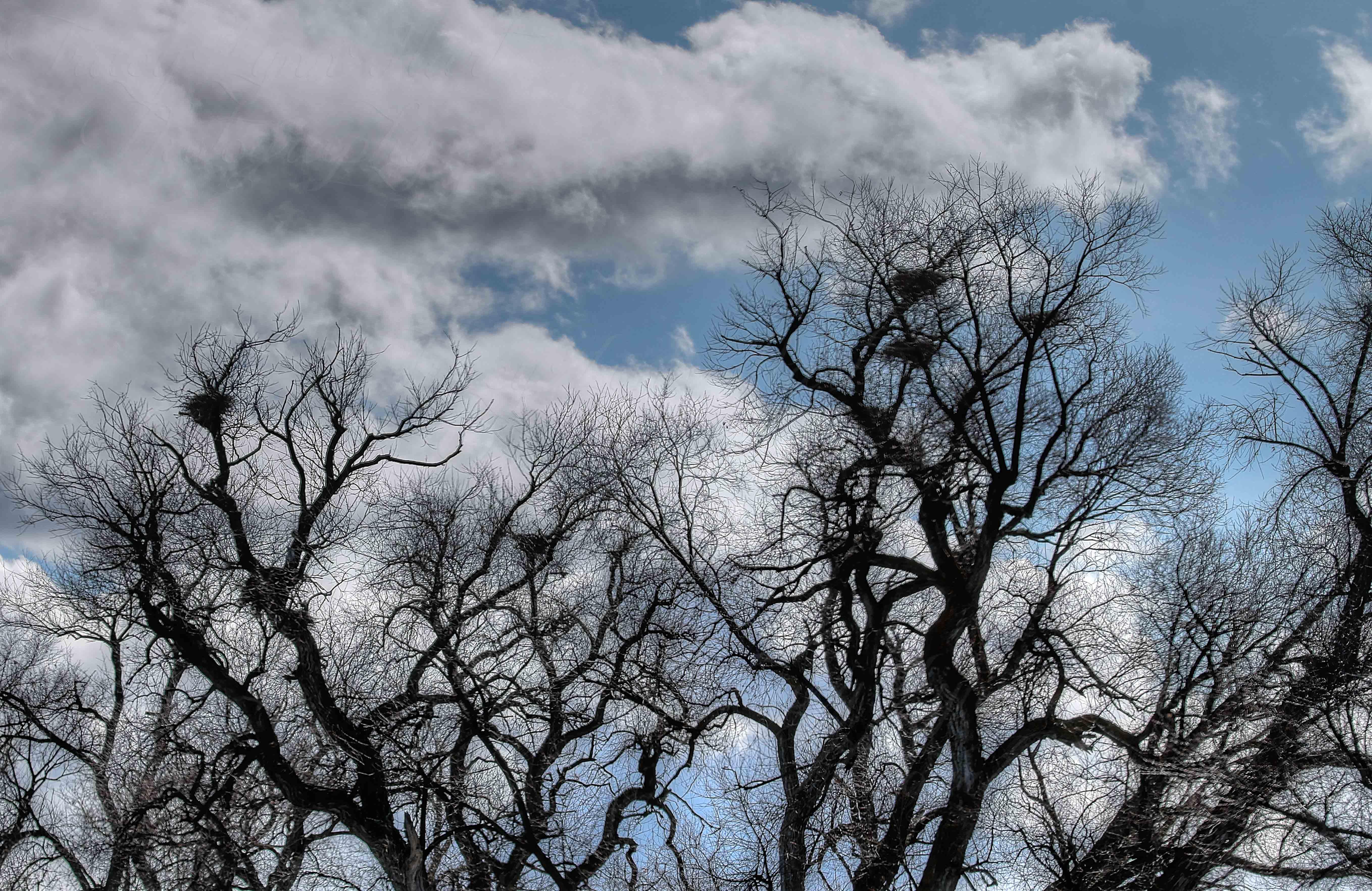 Where eagles nest blog