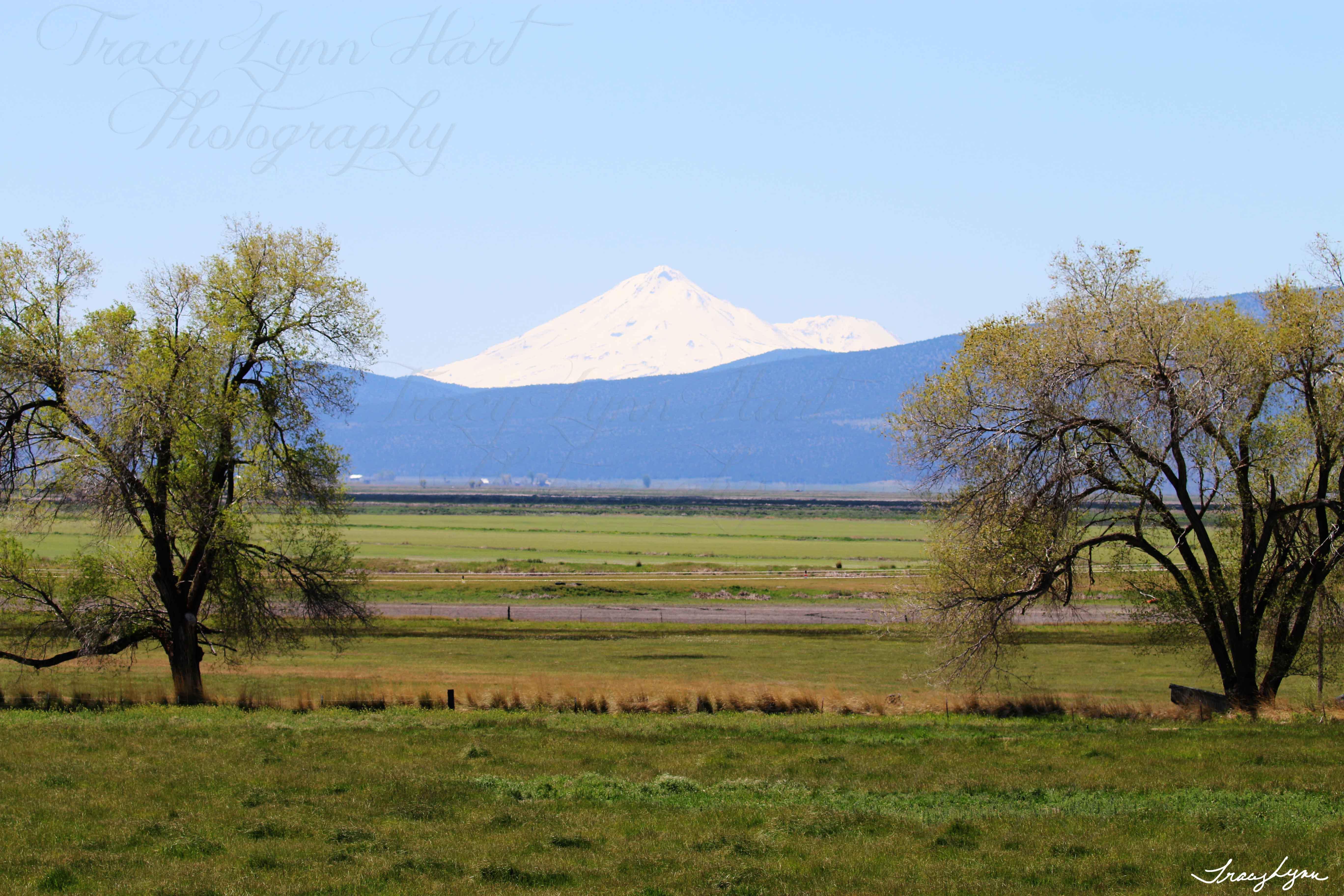 Mt Shasta Spring