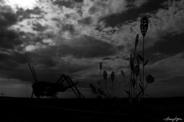 Grasshopper at night bw