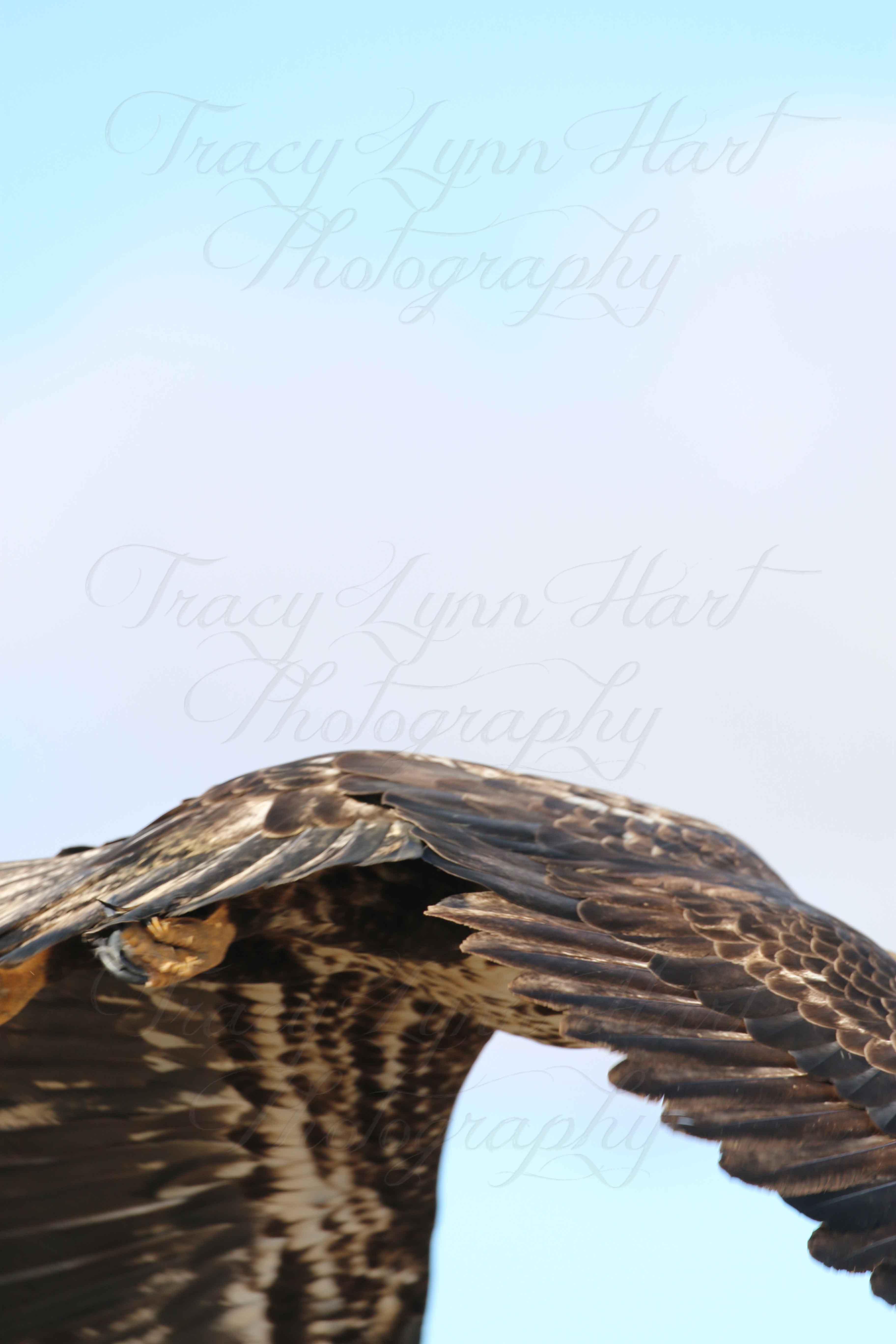 Eagle 05