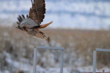 Hawk 05