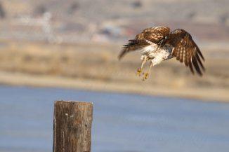 Hawk 07