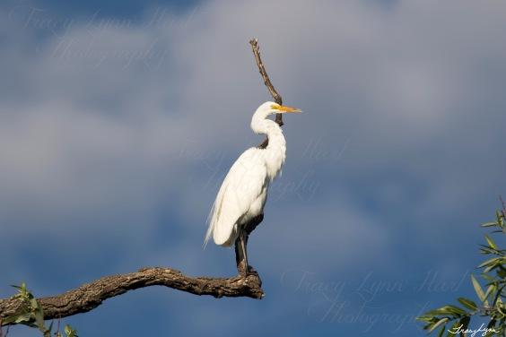 Egret 10