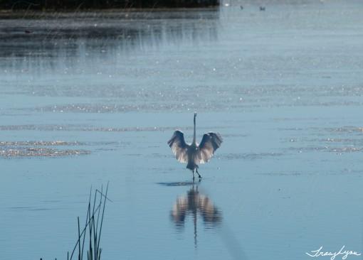 Walking on water copy