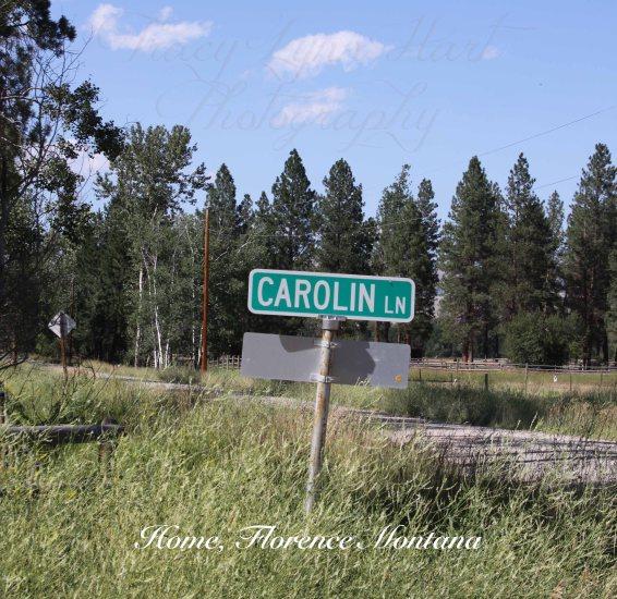 Carolne lane copy