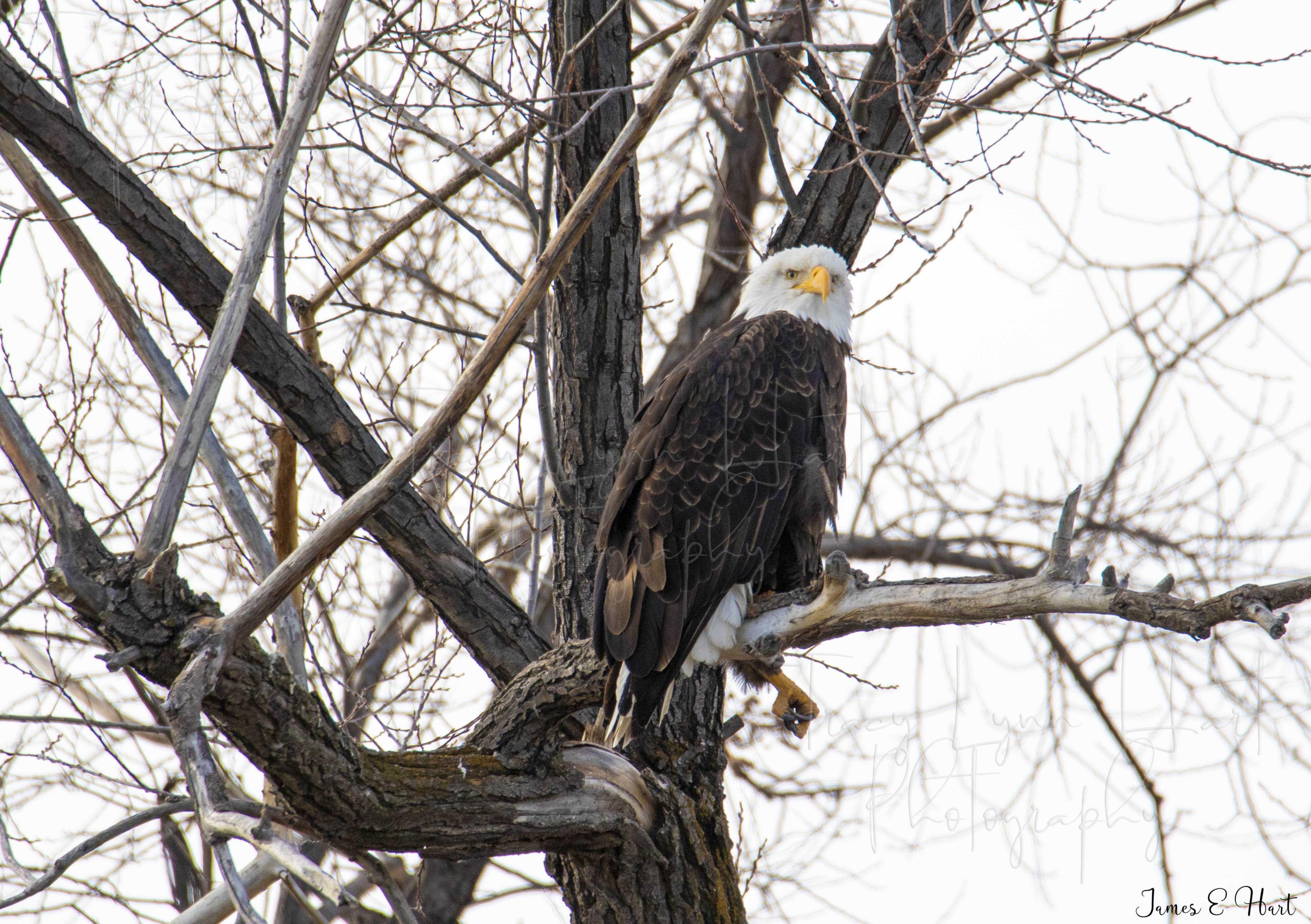 Eagle James E